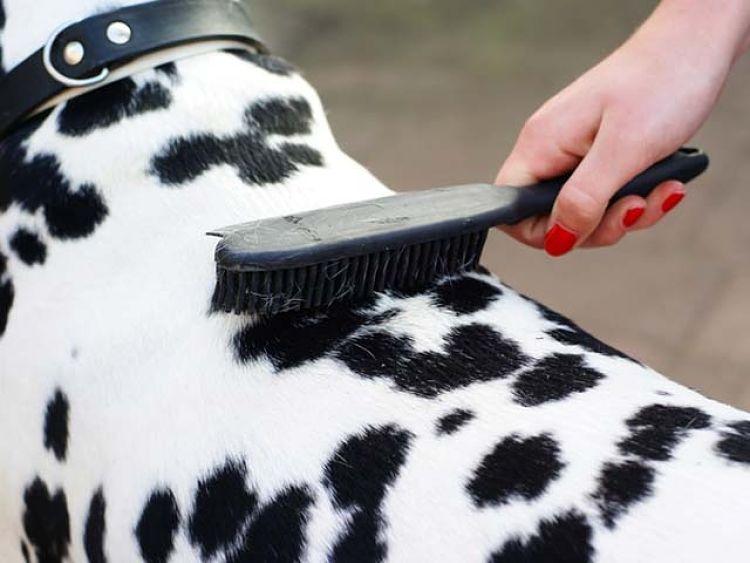 Limpie el cepillo de su mascota de manera efectiva